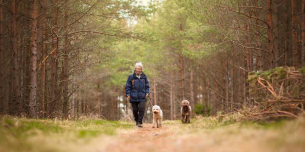 en kvinna och två hundar - hund skog bildbanksfoton och bilder