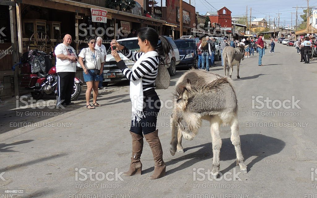 Woman and wild burro pose together stock photo