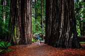 Woman at Stout Grove on trail through the Jedediah Smith Redwoods State Park in Northern California, USA