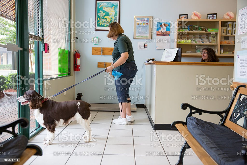 Woman at the vet with her dog stock photo