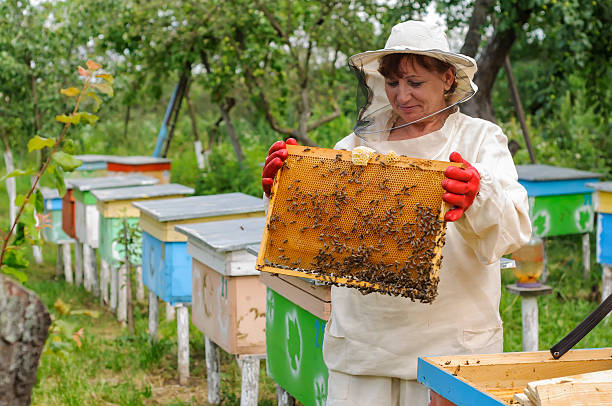 woman beekeeper looks after bees - Photo
