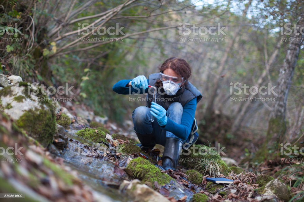 Woman Biological Researcher Taking a Plant Sample from Water stock photo