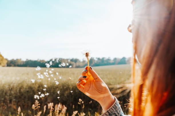 Woman blowing a dandelion flower in summer stock photo