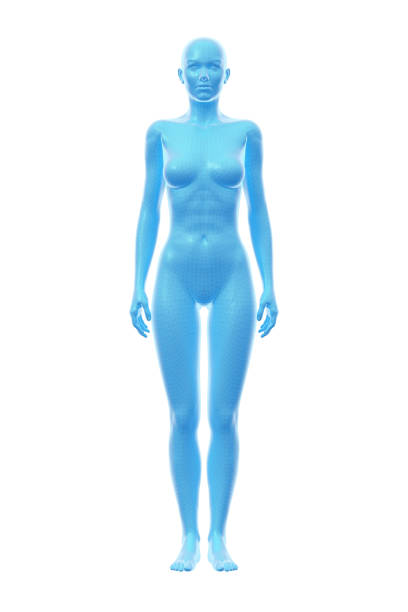 Woman, Body of Human Female, 3D Illustration stock photo