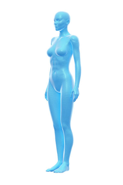Woman, Body of Human Female, 3D Illustration stock photo