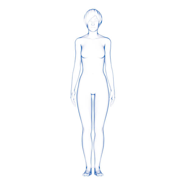 Woman Body Shape stock photo