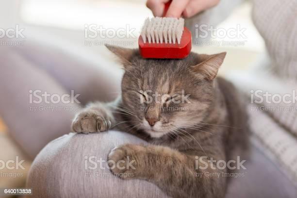 Woman brushing the cat picture id640013838?b=1&k=6&m=640013838&s=612x612&h=8ofouu3gzrkzebz3sestn1wr456pzoszfduwsbhh84u=
