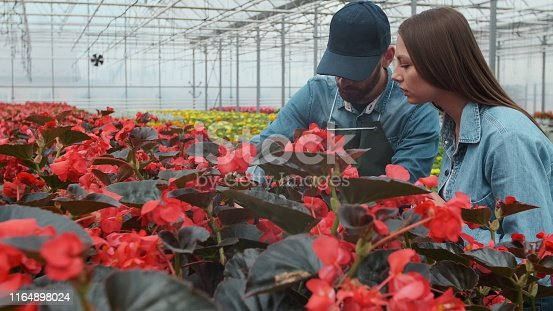 istock Woman Buying Flowers in a Sunlit Garden Shop. 4K. Young woman shopping for decorative plants on a sunny floristic greenhouse market. Home and Garden concept. 1164898024