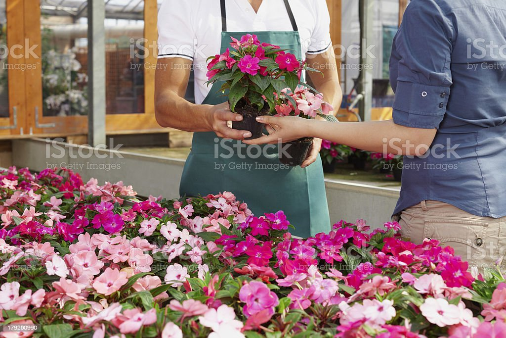 woman buying pink flowers royalty-free stock photo