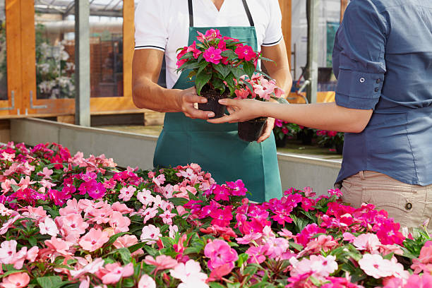 woman buying pink flowers stock photo