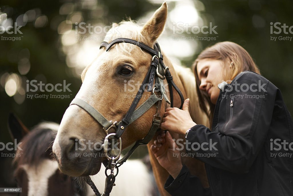 Donna cura per il suo cavallo. foto stock royalty-free