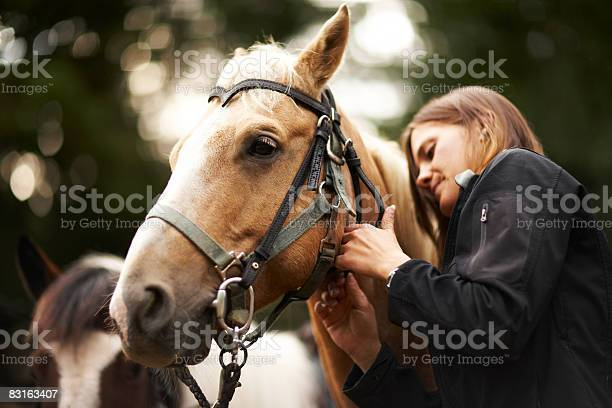 Woman Caring For Horse Stock Photo - Download Image Now