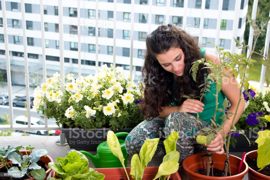 Woman caring of her small kitchen garden in the balcony stock photo