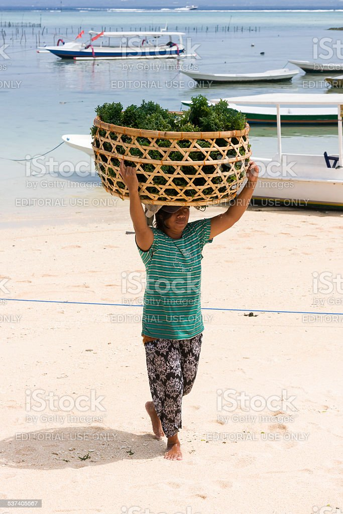 Woman carrying a Seaweed Harvest in Nusa Lembongan stock photo