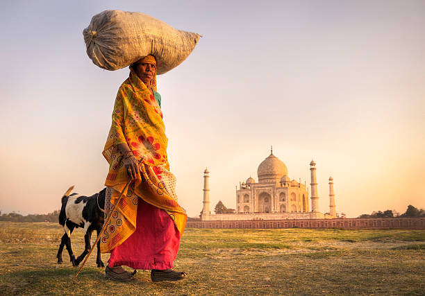 Woman carrying grain on her head in India Indian lady hearding goats near the taj mahal. agra stock pictures, royalty-free photos & images