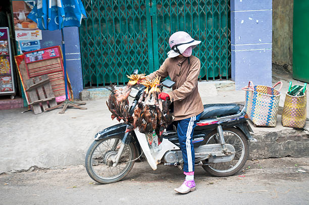 woman carrying live chickens on a motorcycle in vietnam - motorbike, umbrella stock pictures, royalty-free photos & images