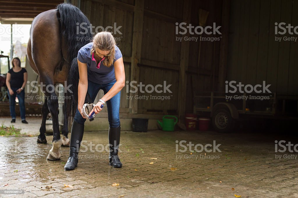 Woman checking her horse's hooves stock photo