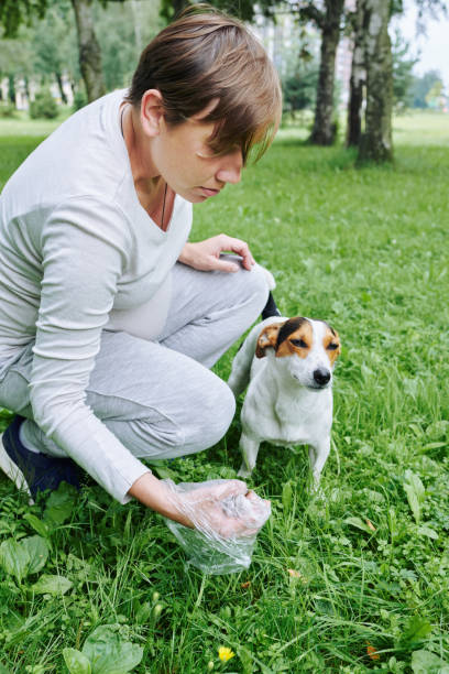 Woman cleaning up after the dog stock photo