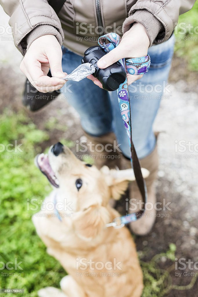 Woman cleans up after her dog during a walk stock photo