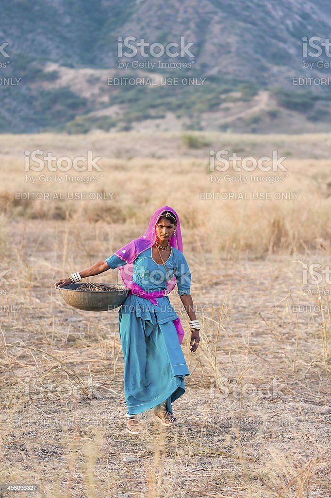 Woman collect camel dung for fuel, Pushkar, Rajasthan, India. royalty-free stock photo