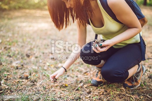 Woman collect pine cones in the forest.