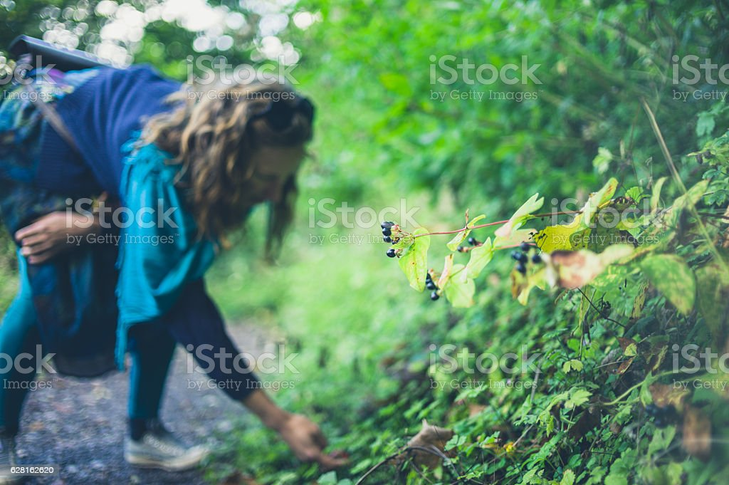 Woman collecting berries in forest stock photo