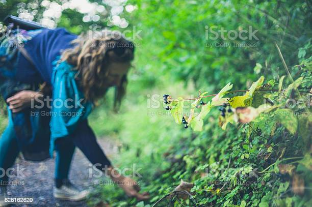 A young woman is collecting berries in the forest