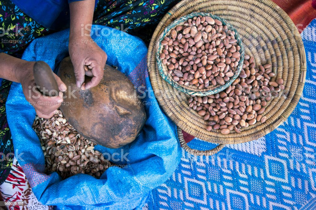 Woman collecting Moroccan Argan nuts stock photo