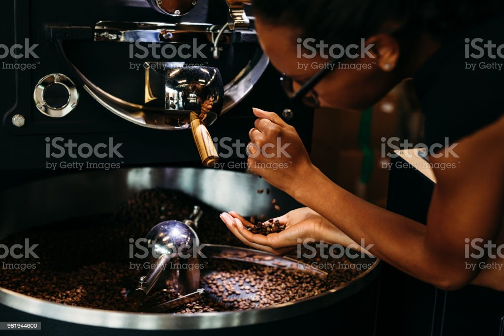 Woman controlling quality of coffee. Barista pouring beans from hand...