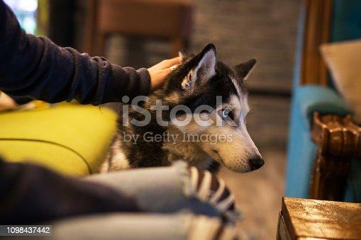 Woman cuddle Siberian husky