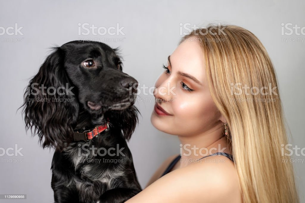 Woman cuddles her pet cocker spaniel dog stock photo