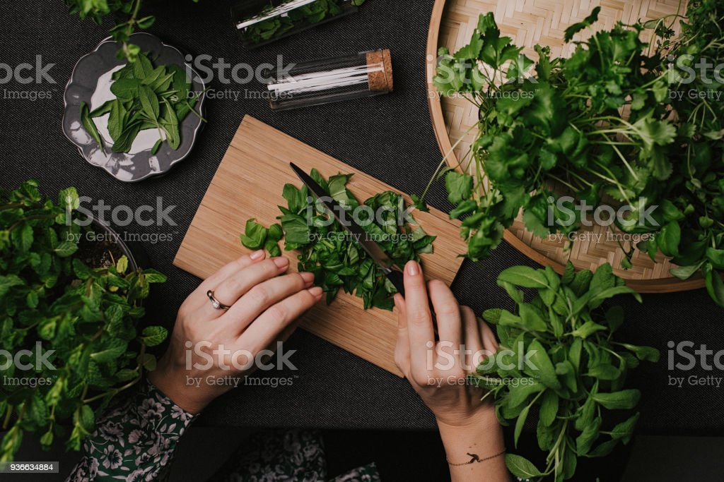 Woman cutting various fresh leaf herbs like sage basil oregano thyme stock photo