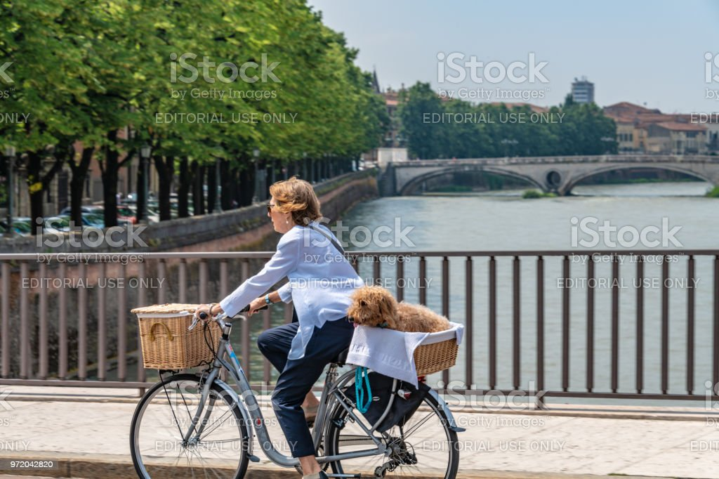 Woman cycles with a dog in a basket over a bridge in Verona, Italy stock photo