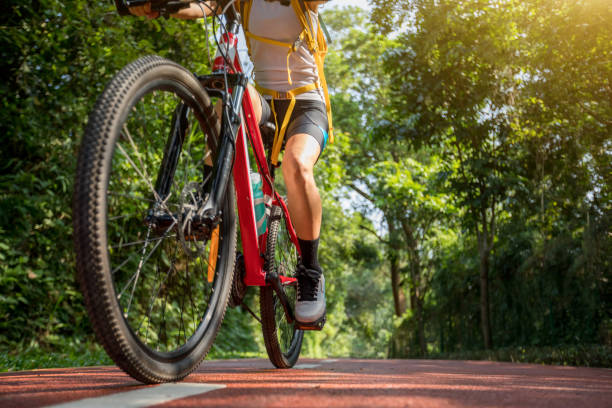Woman cycling on bike path at park on sunny day stock photo