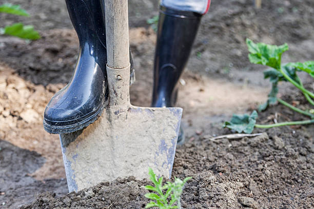 woman digging in the garden with black boots stock photo