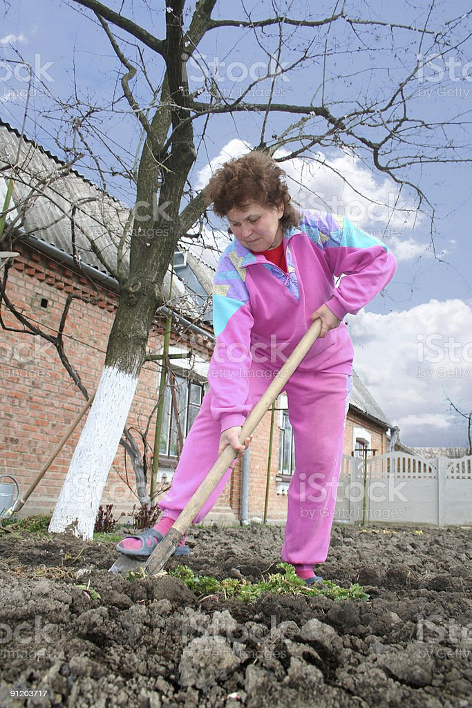 woman digs a kitchen garden royalty-free stock photo