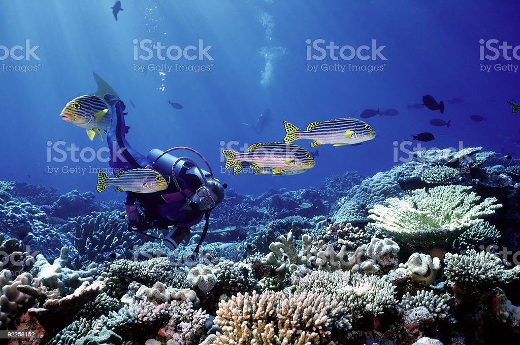 Woman Diver and South Pacific fish royalty-free stock photo