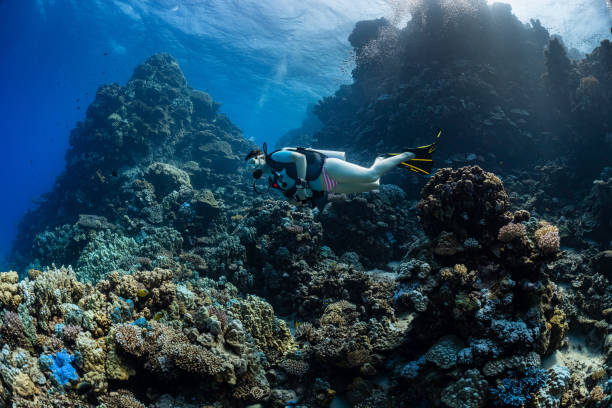 woman diver visiting underwater cave in the Red Sea, egypt, Shaab Claude stock photo