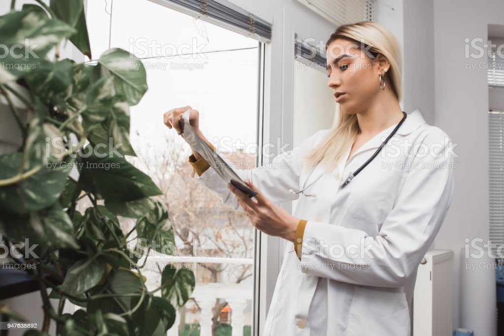 Woman doctor checking  film x-ray stock photo