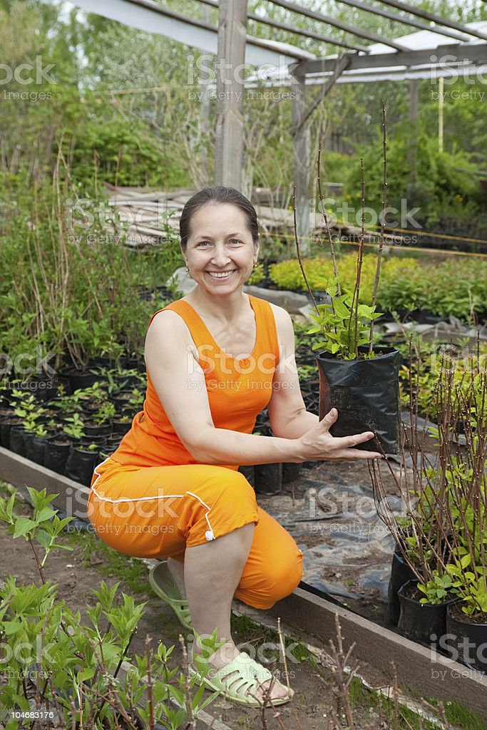 woman doing work in her garden royalty-free stock photo