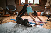 Young woman practicing downward facing dog pose playing with her pet in the living room