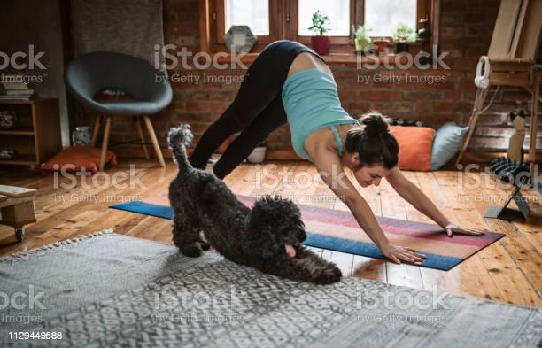 Donna Che Fa Yoga Con Il Suo Cane - Fotografie stock e altre immagini di Abbigliamento sportivo
