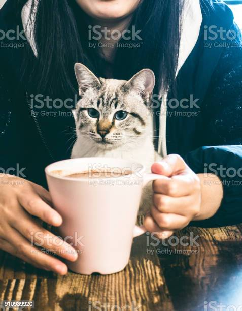 Woman drinking coffee with cat picture id910939920?b=1&k=6&m=910939920&s=612x612&h=0g9qduigl14stoezwdauum2fqsntrykjqsxcewotxoy=