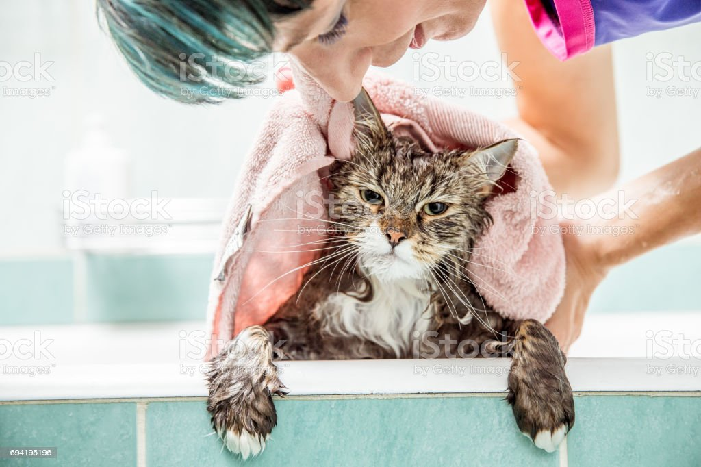 Woman Drying  Wet Cat With Towel  In The Bathroom stock photo
