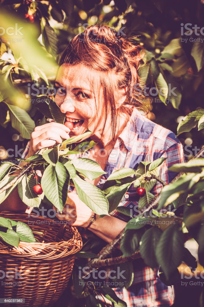 Woman Eating Cherries in her Orchard stock photo