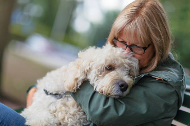 Woman embracing her dog stock photo
