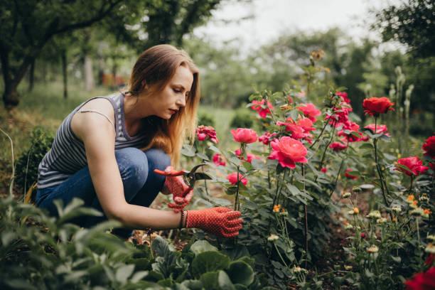 Woman enjoying gardening in the back yard stock photo