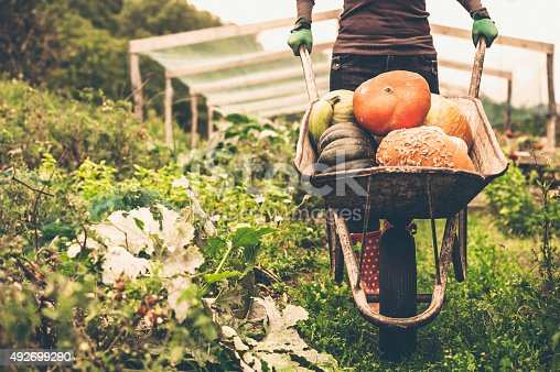 Women pushing the wheelbarrow full of pumpkins
