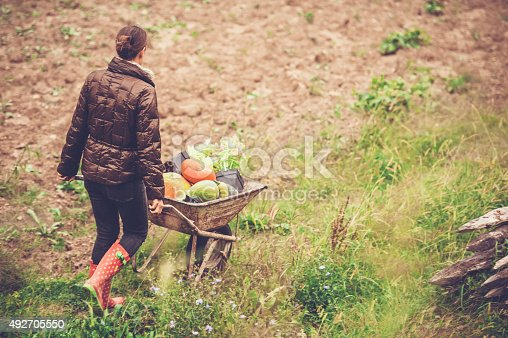 istock Woman Enjoying in her Vegetable Garden 492705550