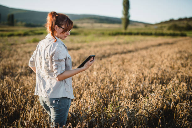 Woman examining in the field stock photo